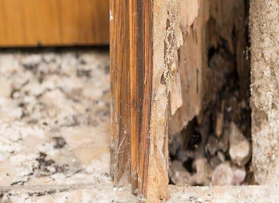 Termite Control Experts