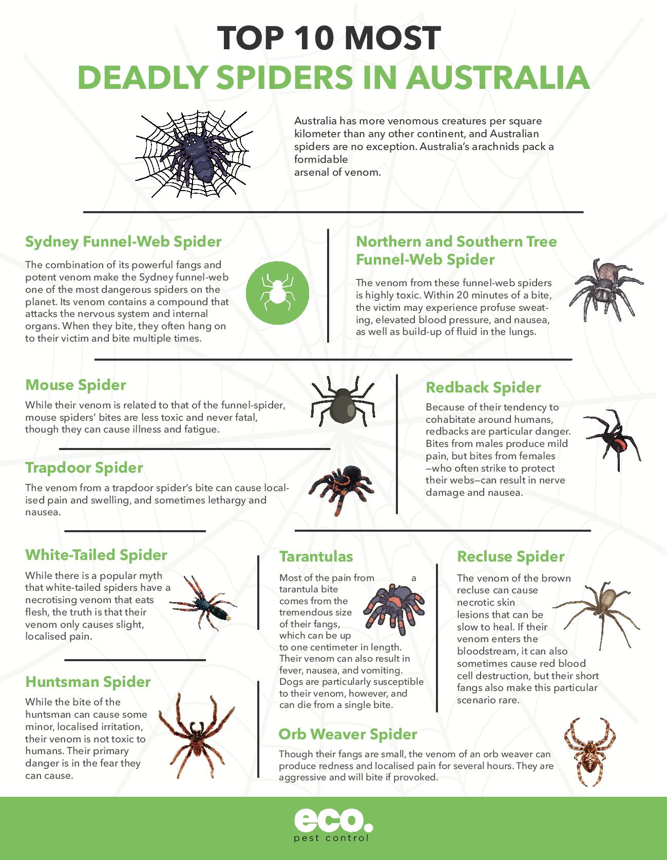 Top 10 Most Deadly Spiders in Australia - Infographic