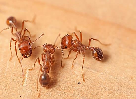 Ant Control Experts Brisbane