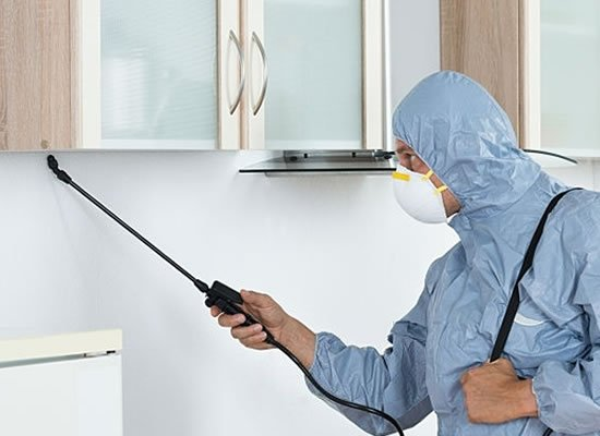 Contact Ant Control Experts