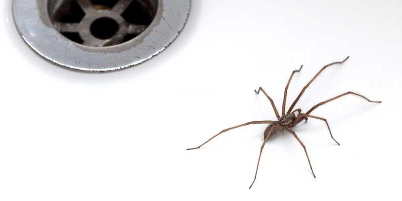 Common Types of Pest in Australia