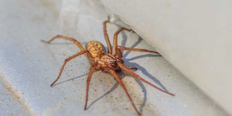 Top 10 Amazing Home Pest Facts