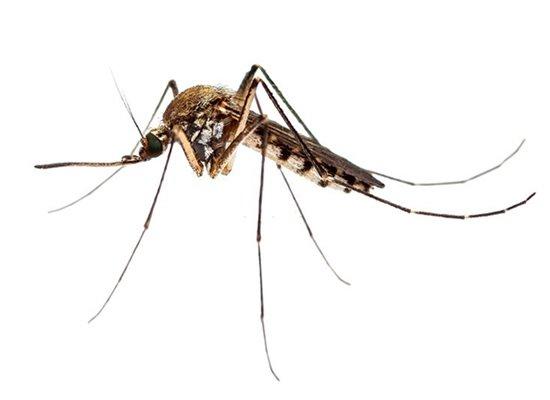 Mosquito Control Brisbane