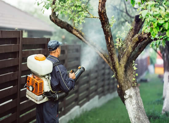Contact Mosquito Control Experts