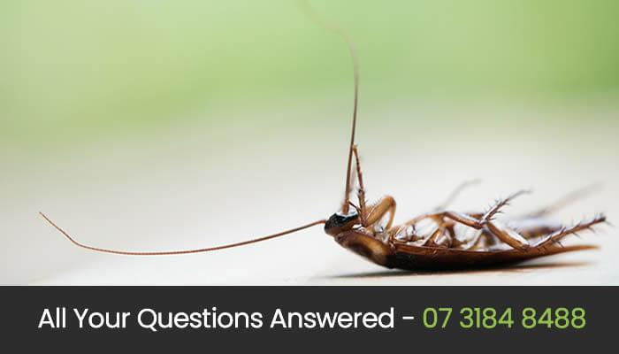 Free Pest Control Advice