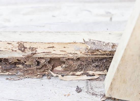 White Ant Damage