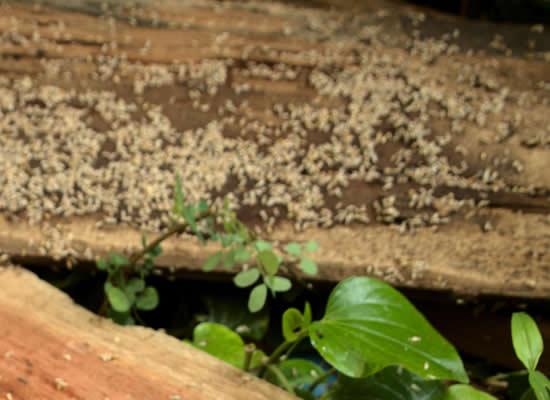 Termite Inspection Brisbane Northside