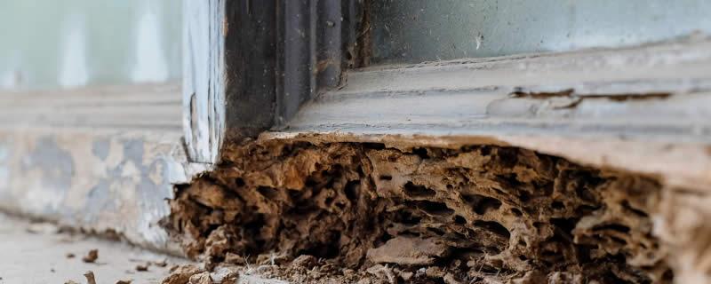 Termite Damage Brisbane